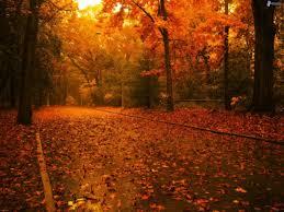 foto-foglie